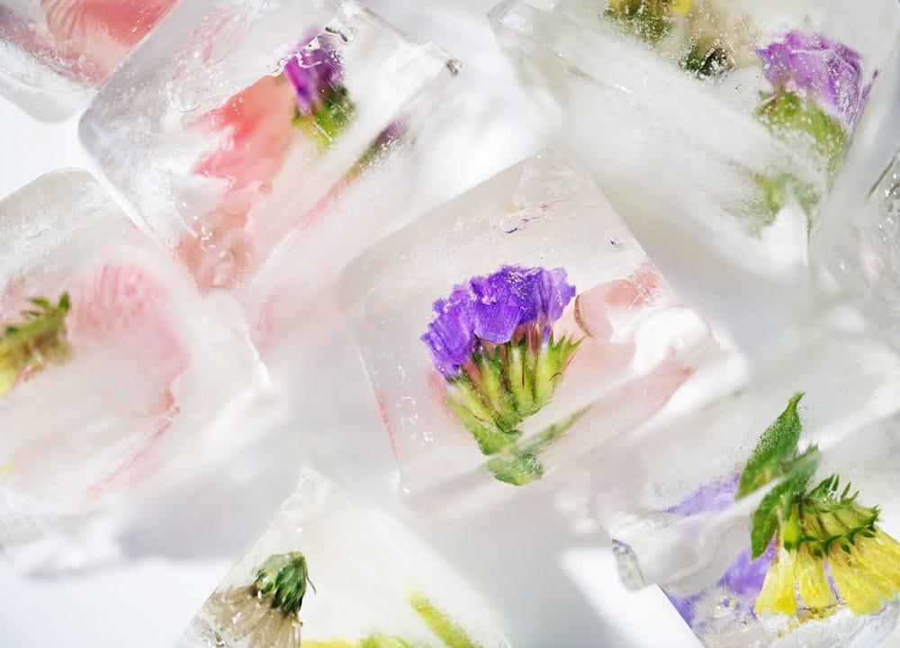 Eiswürfel kreativ mit Blüten einfrieren